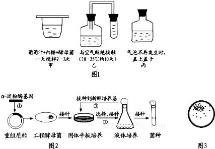 如图1表示葡萄酒的酿制过程,请据图分析