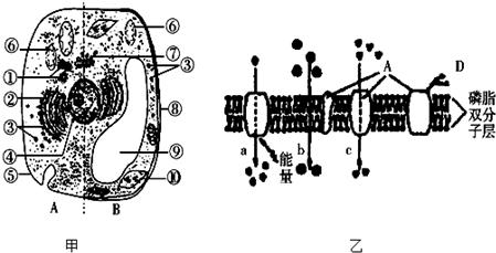 如图为动,植物细胞亚显微结构及细胞部分结构示意图,据图回答下列问