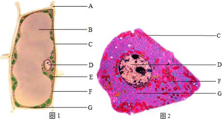 (3)动物,植物细胞都具有的结构是______,______,______.