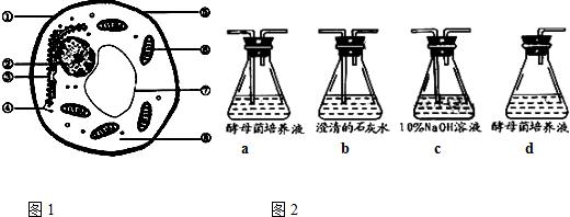 如图1为酵母菌细胞结构示意图.请回答下列问题
