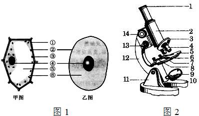 如图分别为细胞结构和显微镜结构示意图,请据图回答