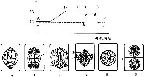 如图是某植物细胞有丝分裂一个细胞周期中若干曲线变化图和表示细胞有