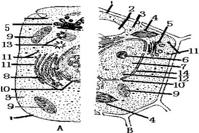 如图表示动物,植物细胞二合一亚显微结构模式图.