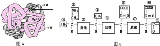 如图a是血红蛋白的空间结构模式图,其中含有两条α,两