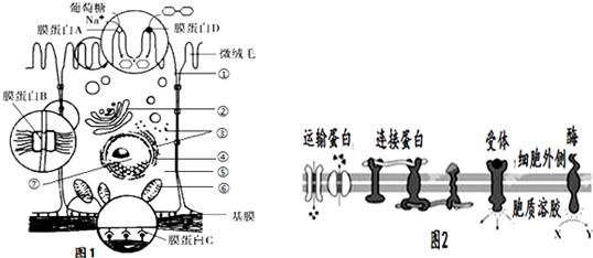 如图为小肠上皮细胞亚显微结构示意图,请据图回答下列