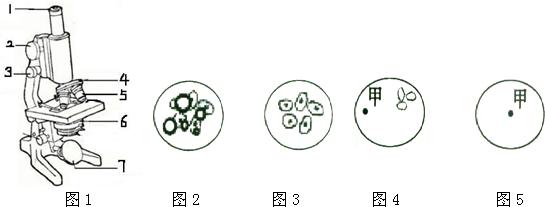 如图是普通光学显微镜构造图,请据图回答