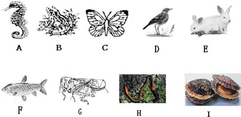 (1)图中属于脊椎动物的是______(填字母) (2)图中属于软体动物的是