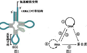 图1为翻译过程中搬运原料的工具trna,图2为中心法则的图片