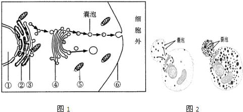 图1为某细胞结构模式图(局部).请分析并回答下列问题