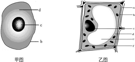 如图是植物细胞和动物细胞的结构示意图.据图回答下列