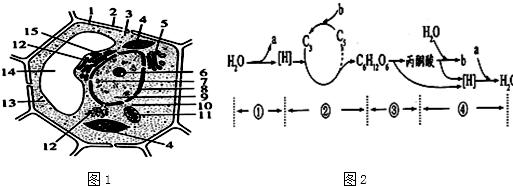下面图1是植物细胞亚显微结构模式图,图2是植物叶肉中