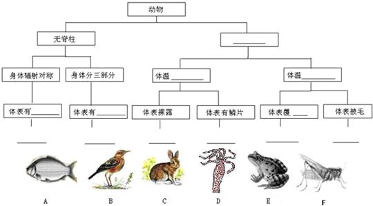 请对下列动物进行分类,并将下表的空格补充完整.