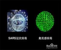 新型冠状病毒与SARS的区别