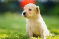 新手养狗应该注意哪些?