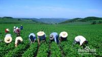 怎样搞好农业合作社