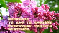 了解有害花和有益花的功能