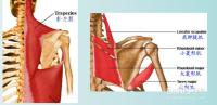 肩胸关节内收肌力检查