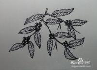线描画:植物