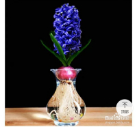 没有风信子花瓶怎么给风信子制作一个花瓶呢