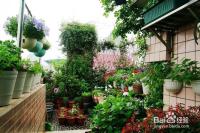 如何在家里阳台上养花?