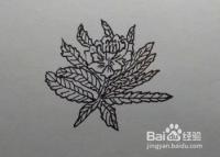 简笔画:苣荬菜的画法(方法、步骤)