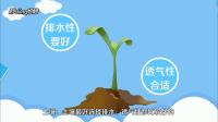 文心兰的养殖方法和注意事项有哪些