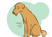 如何判断狗狗是不是快死了