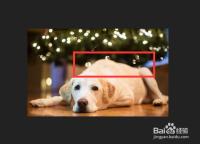 如何摸狗狗让它感觉最舒服?