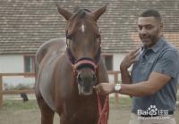 教你骑马技巧--如何上下马