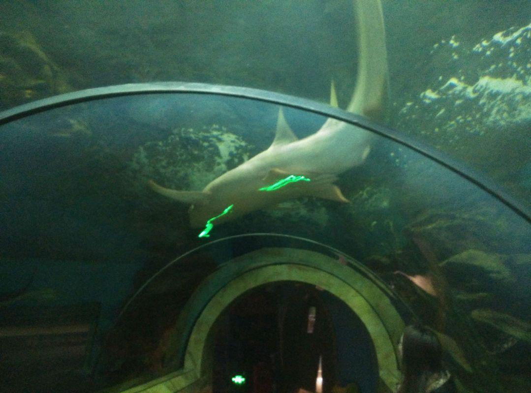 壁纸 动物 海底 海底世界 海洋馆 水族馆 鱼 鱼类 1079_800