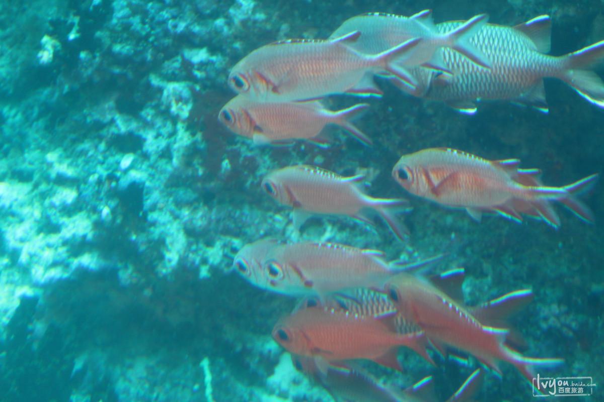 壁纸 动物 海底 海底世界 海洋馆 水族馆 鱼 鱼类 1200_800