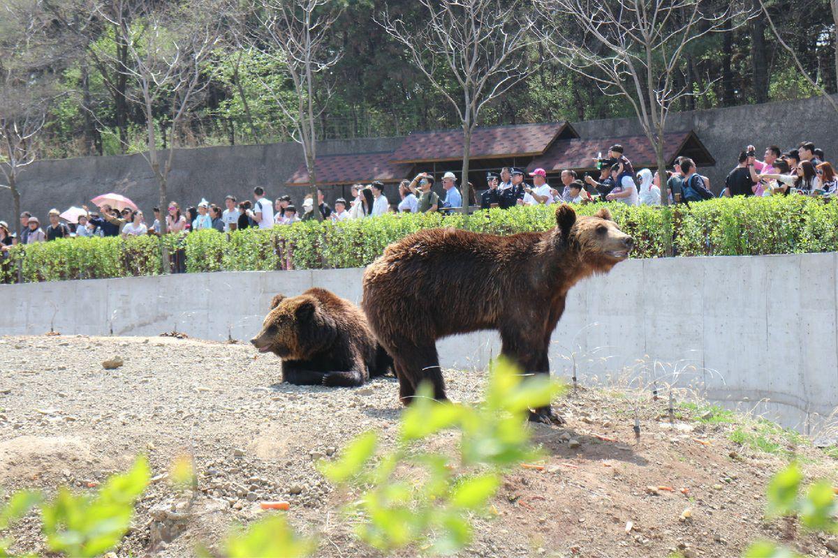 沈阳棋盘山野生动物园
