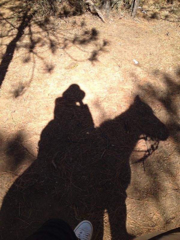 动物影子连线高清