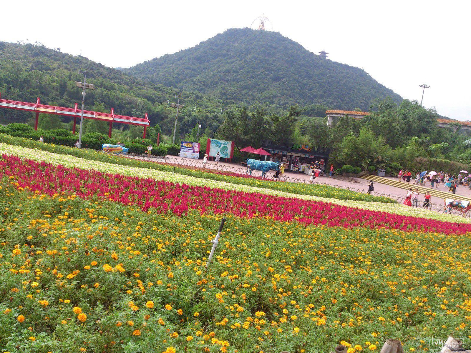 森林童话--独特的高空小火车_东部华侨城大侠谷旅游图片