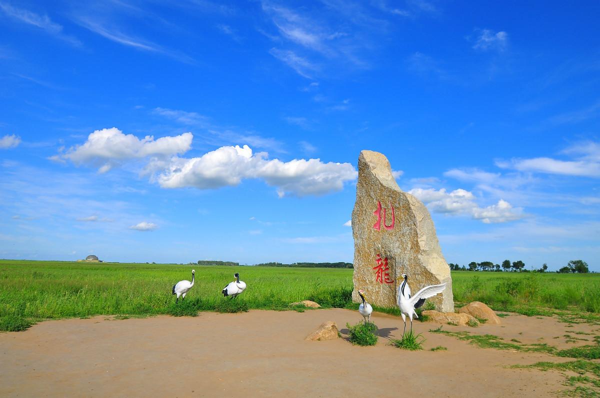 齐齐哈尔旅游景点——世界著名的扎龙湿地是中国最大的国家级珍稀水禽