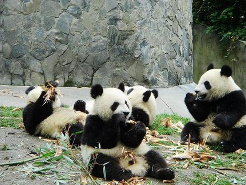 帮我安排 我自己排 免费定制行程计划 旅游地图 查看大图 1成都大熊猫