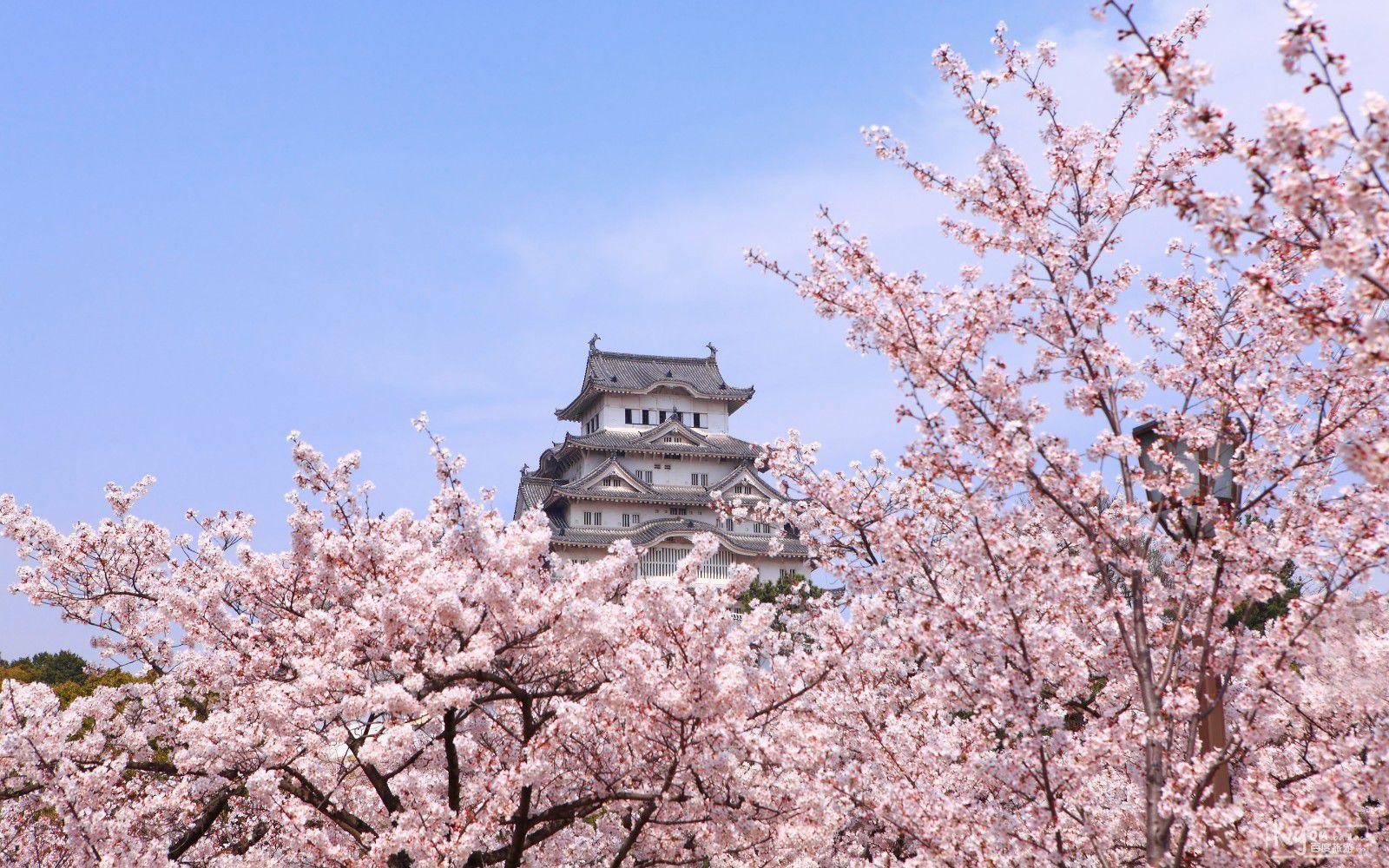 一次性带你了解日本东京各大景点 | 东京旅游攻略指南