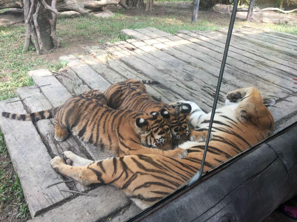 广州长隆动物园图片