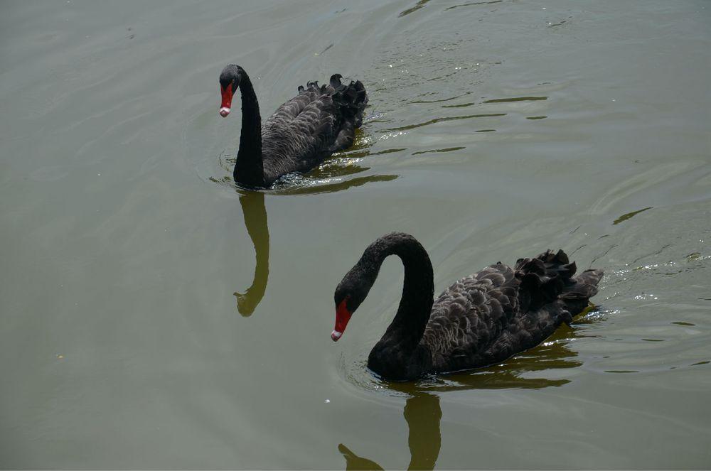 距沈阳市中心25公里,沈阳森林动物园占地面积217公顷.