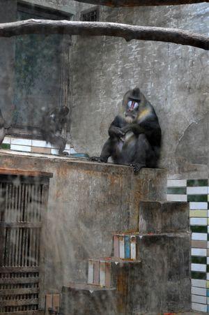 唐山-北京动物园