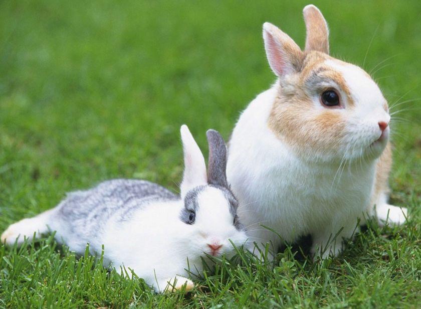 壁纸 动物 兔子 840_616