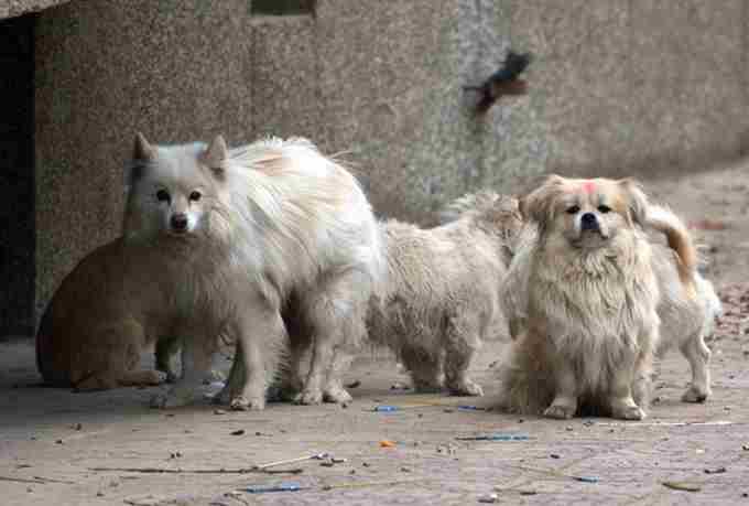 怎么救助受伤的流浪狗?