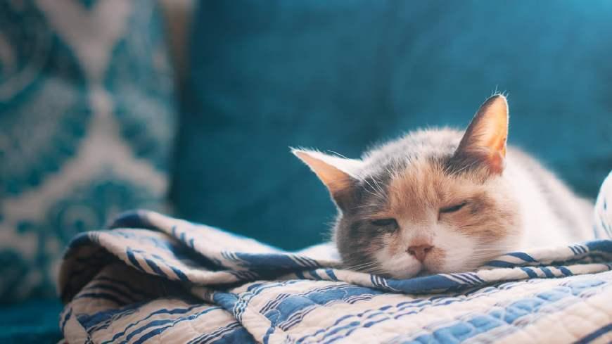 猫咪生病后该怎么办?