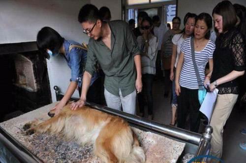 宠物火化的方式,正在被越来越多的人认可