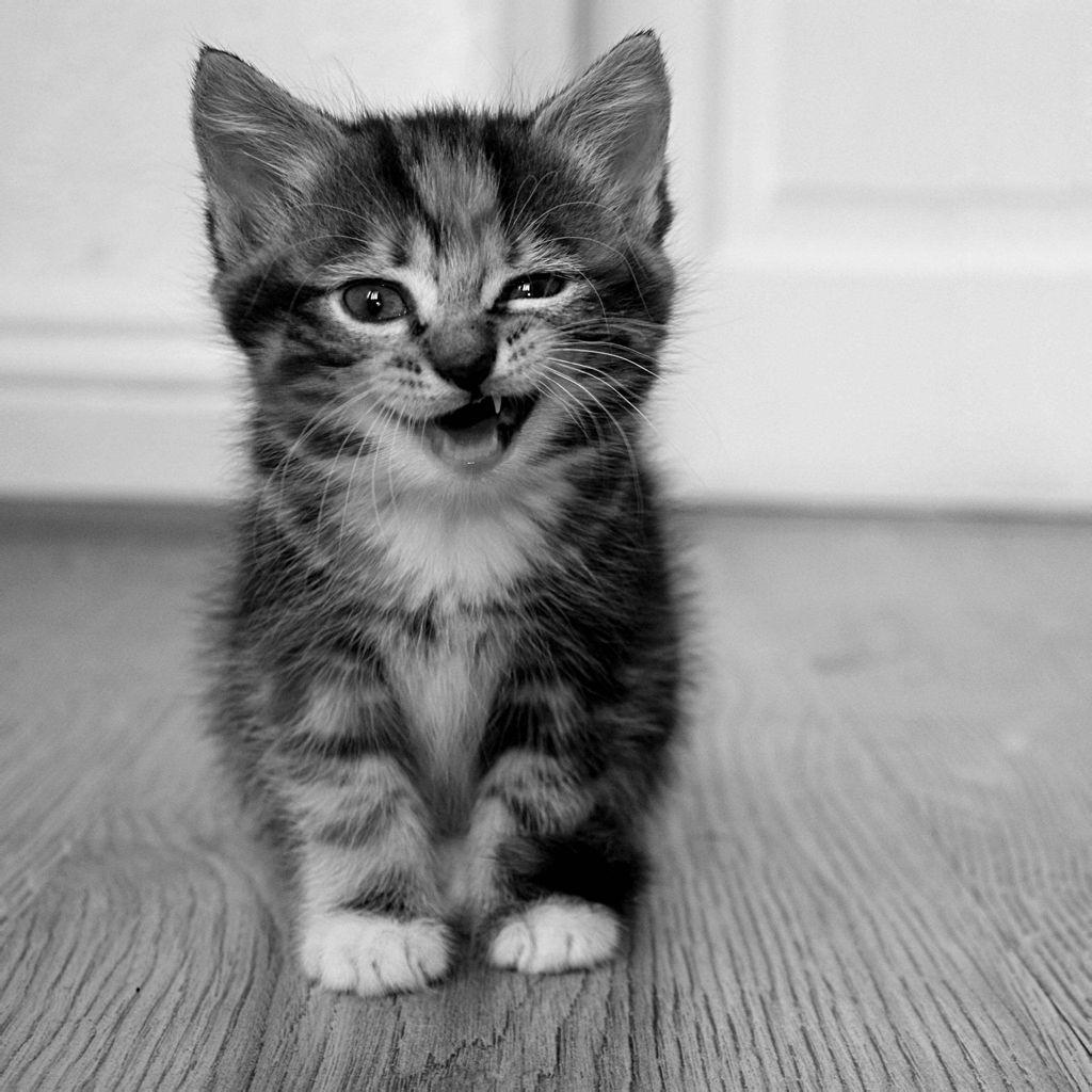 求这张的【原图】吖~是一只 咧嘴坏笑 很有灵气的猫 黑白色(非动漫~)