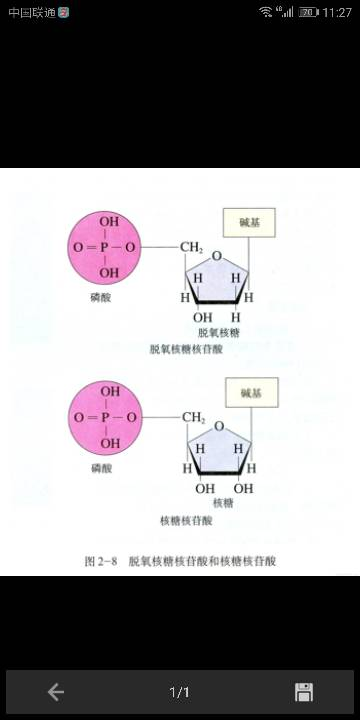 高中高中脱氧生物分子式不是c5h8o4怎么样核糖汇文图片