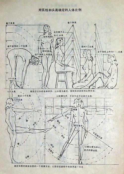 人体比例_用弧线和头高确定的人体比例
