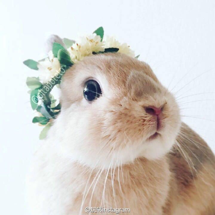 动物兔子图片