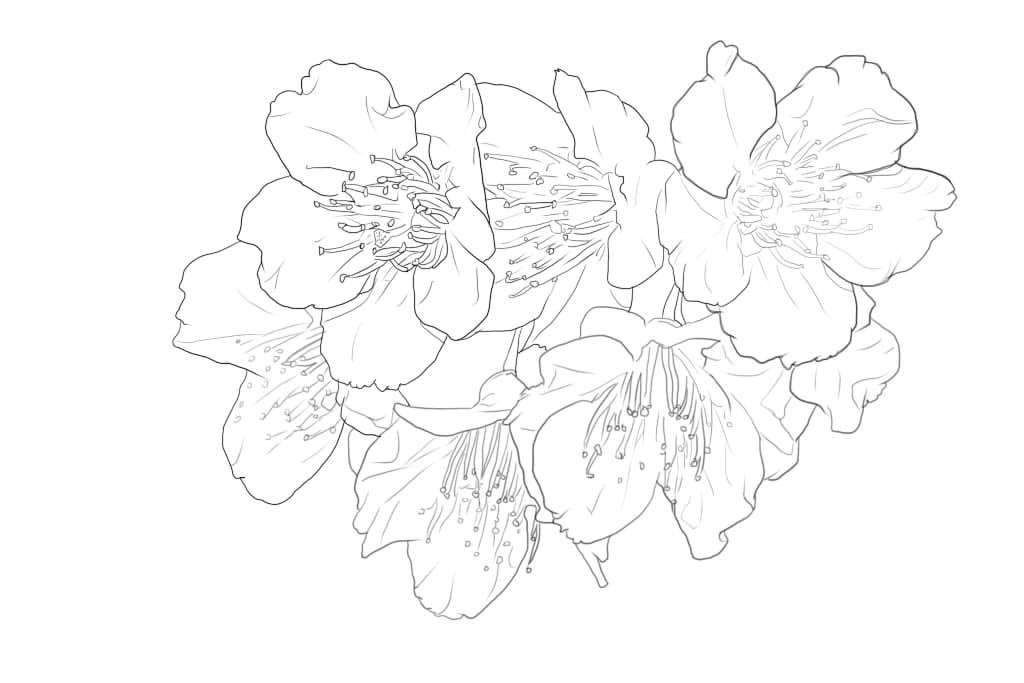手绘樱花树画法