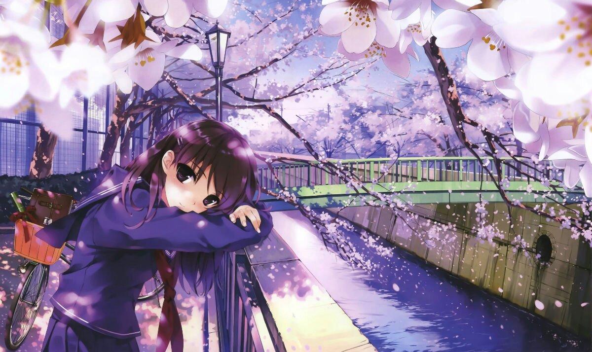 唯美的日本动漫图片!最好是紫头发的女生,校园风格,还有一些樱花!5张